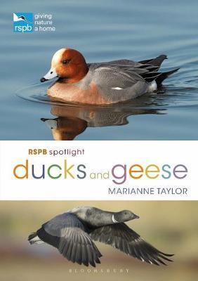 Image for RSPB Spotlight Ducks and Geese from emkaSi